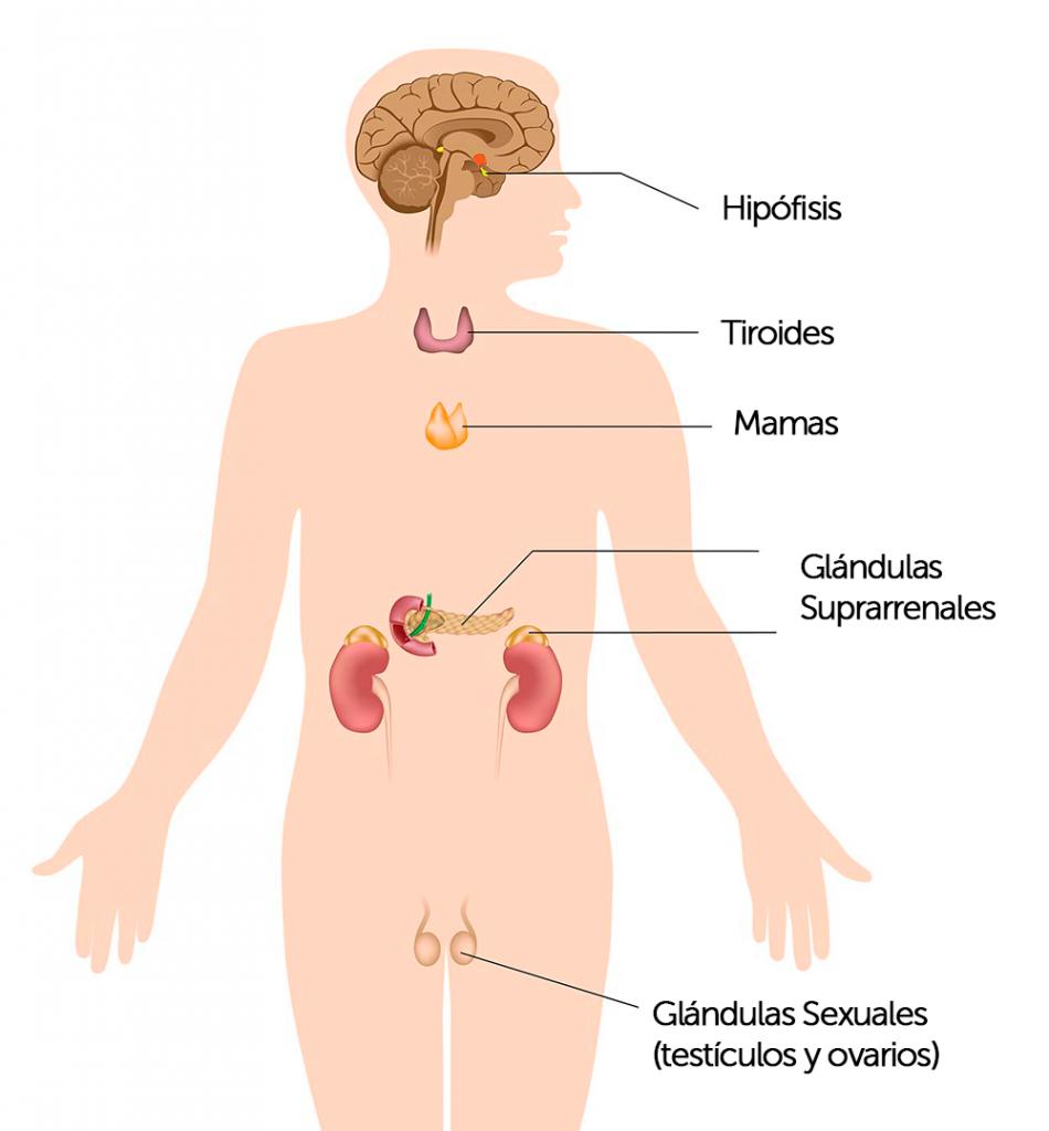 glandulas